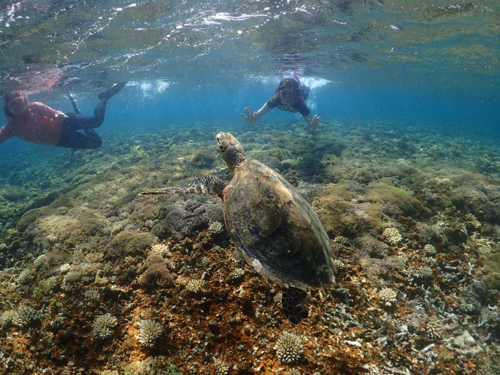 石垣島の海にいたウミガメの画像